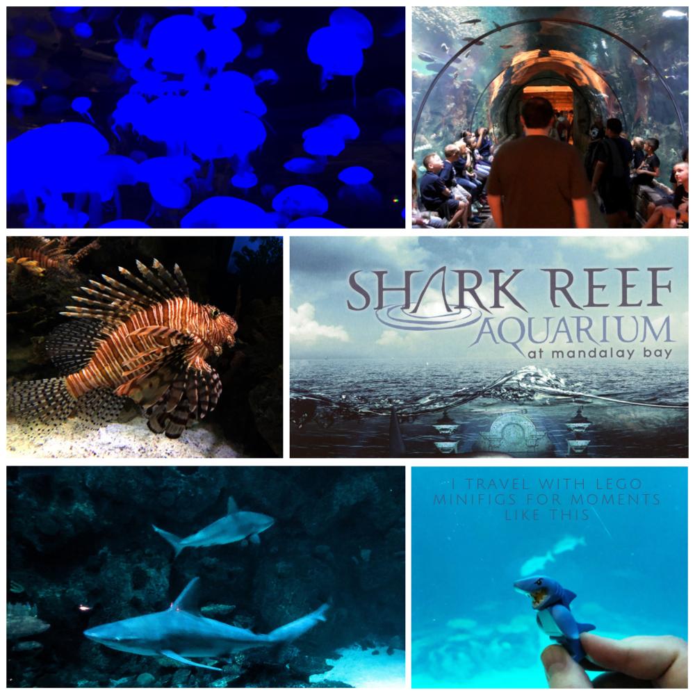 CANVA shark reef.png