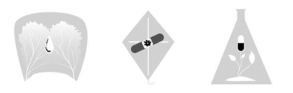 Chosen Logo Concept