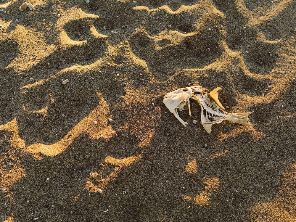 BAJA_FISHING_2015_0846.jpg