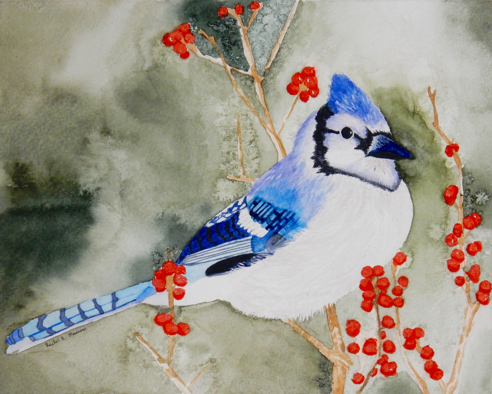 Rachel Mancour.16yrs.watercolor.The Bluejay