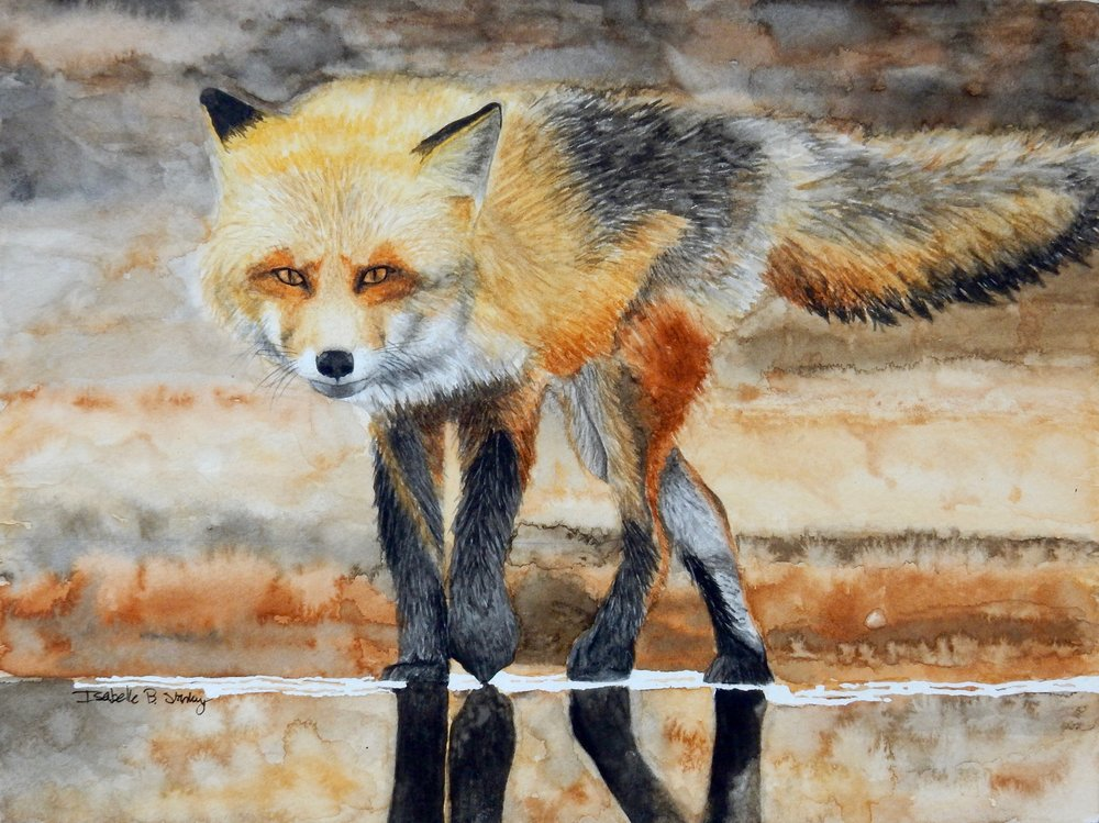 Isabelle Stanley.Fox.watercolor