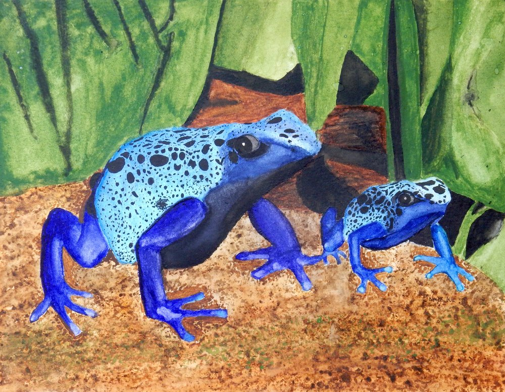 James Wu.8th grade.Blue Frogs.watercolor