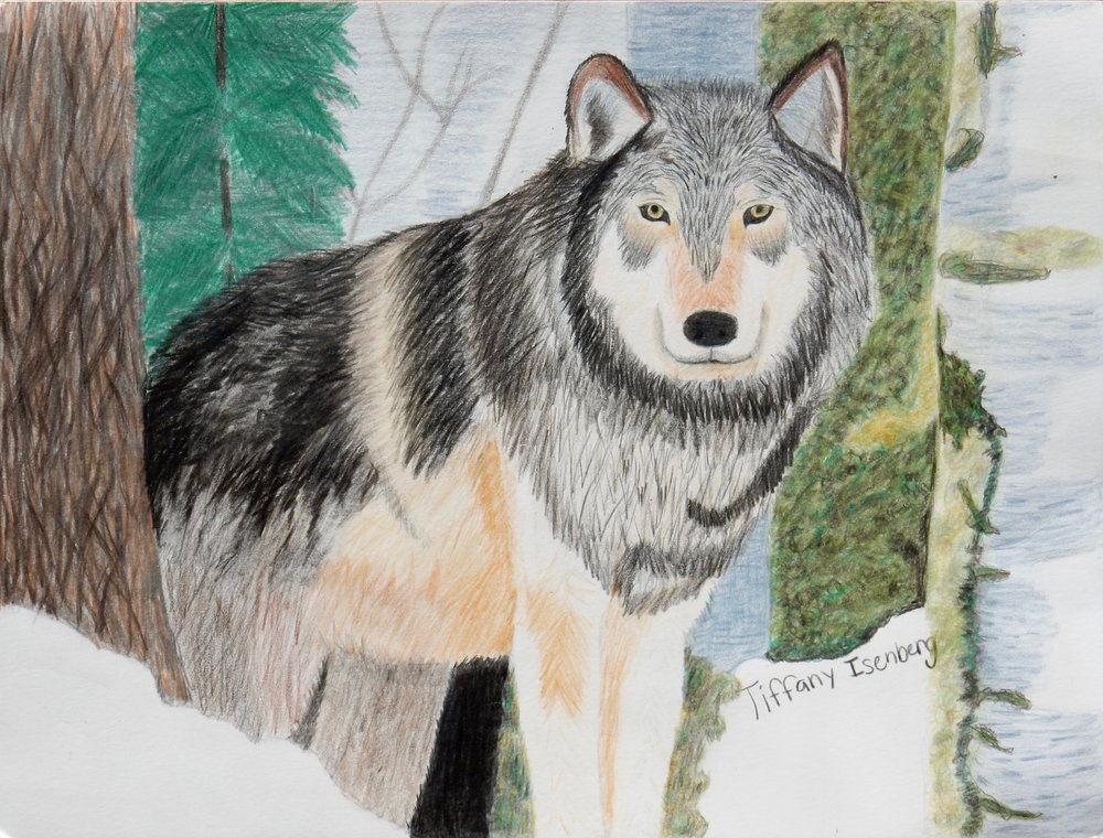 Tiffany Isenberg.12yrs.colored pencils