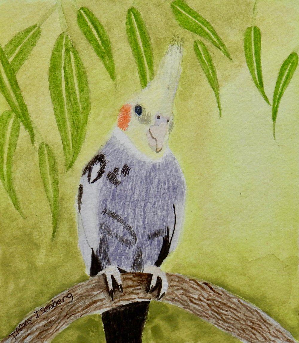 Tiffany Isenberg.12yrs.watercolor bird