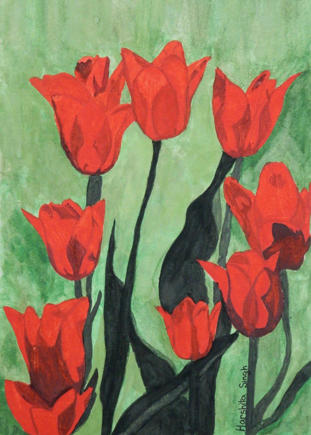 Harshita Singh.6th grade.watercolor.Tulips