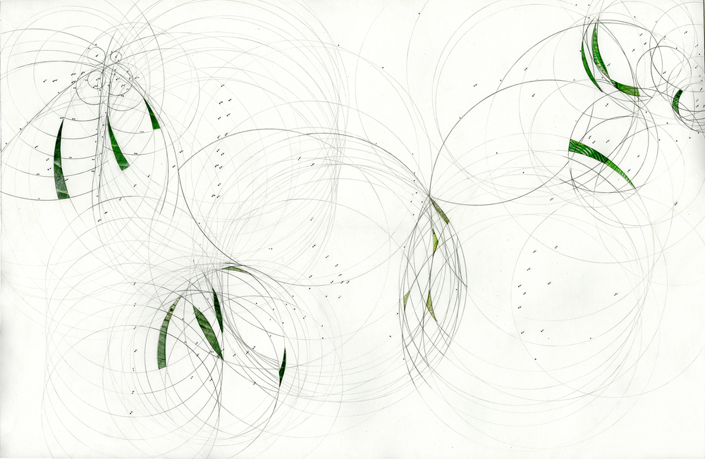 Final drawing of Melostomataceae documentation with leaf overlays