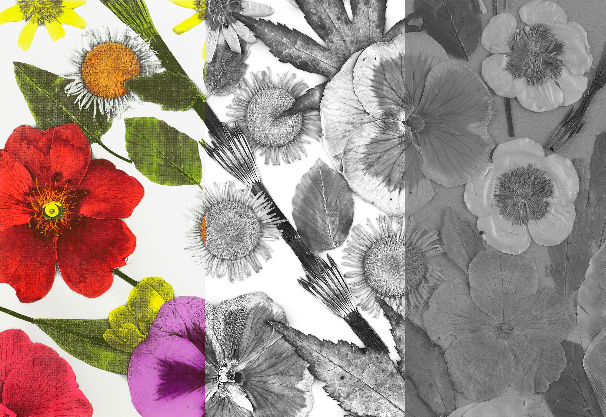 Floral 1 photo-process