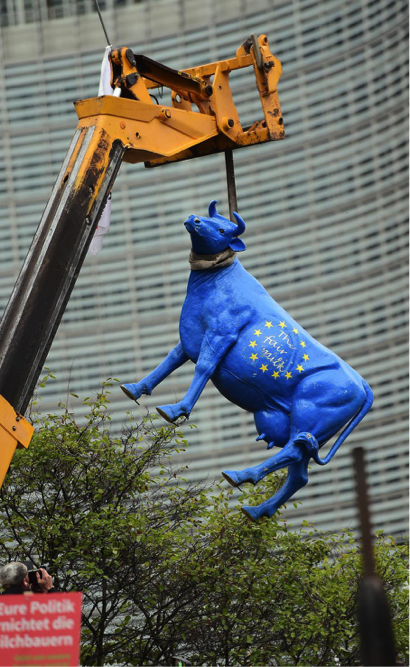 A hung cow, coloured with the European Flag, in front of the European Commission in Brussels, witnessing the anger of the farmers. Photo credit: Emmanuel Dunand/AF