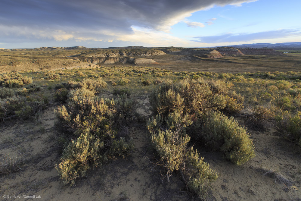 The drilling of 3,500 wells would significantly impact this intact sagebrush-steppe habitat in the proposed Naturally Pressured Lance gas field project area.