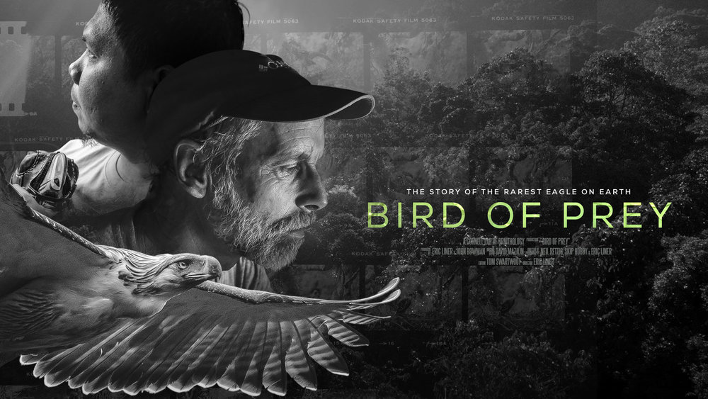 BirdofPreyPoster16_9.jpg