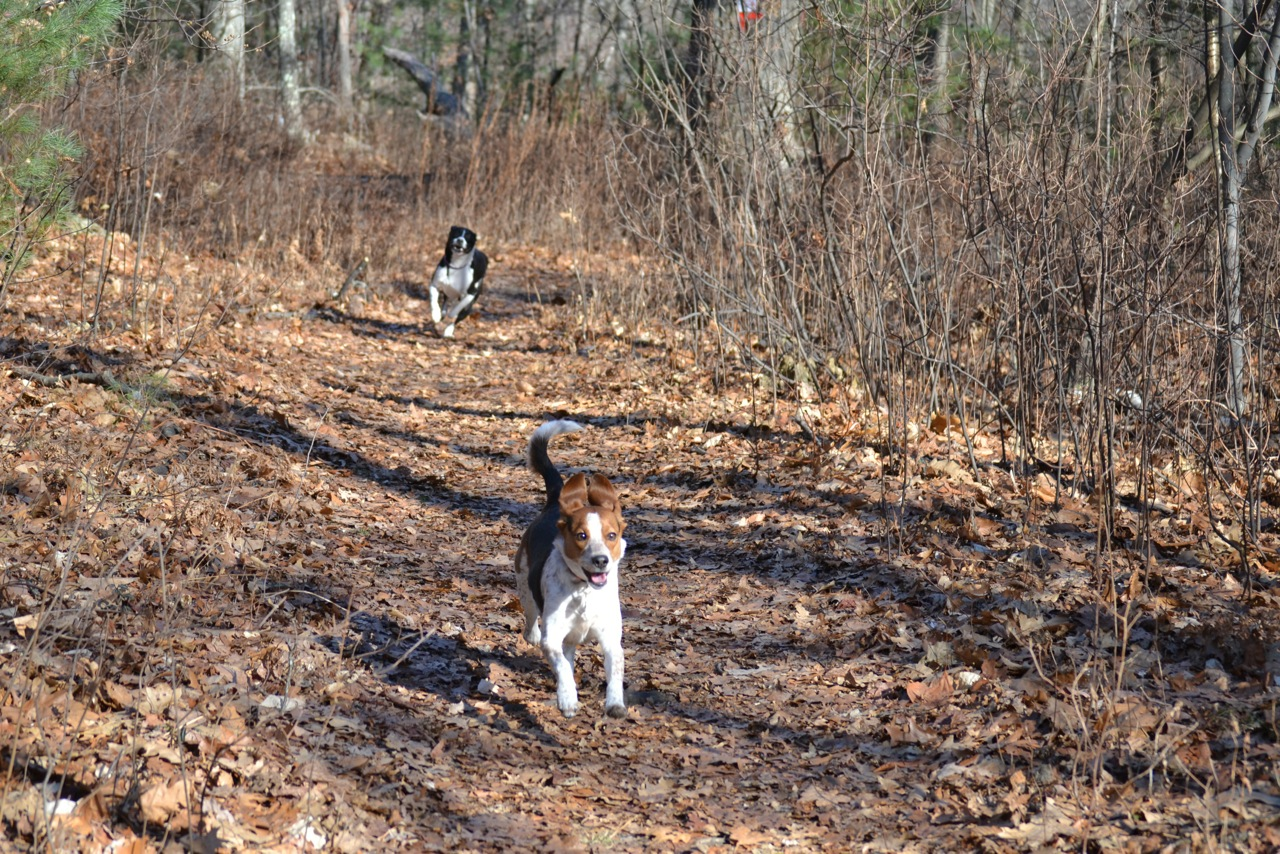 The Best Feeling in the World is having two dogs turn on a dime in the woods to race back to you.