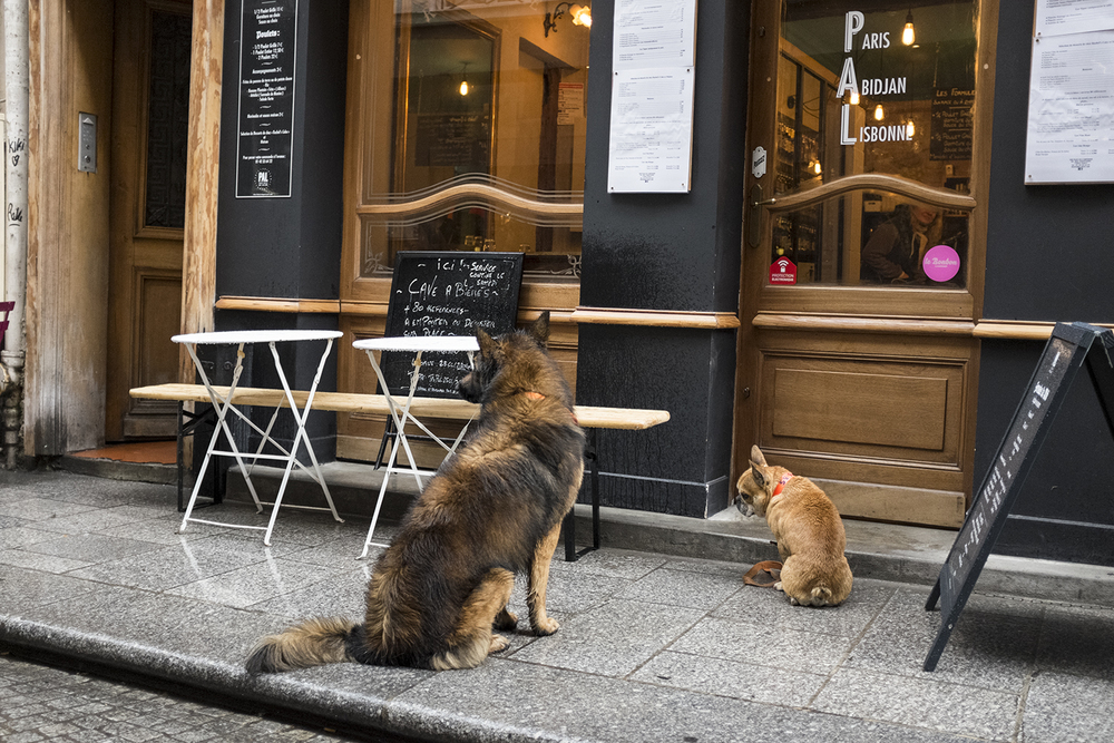 Paris was full of beautiful dogs <3