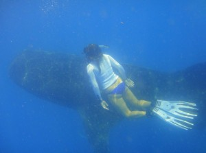 Making Whaleshark friends