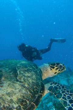 Anna and a sea turtle friend in Playa del Carmen.