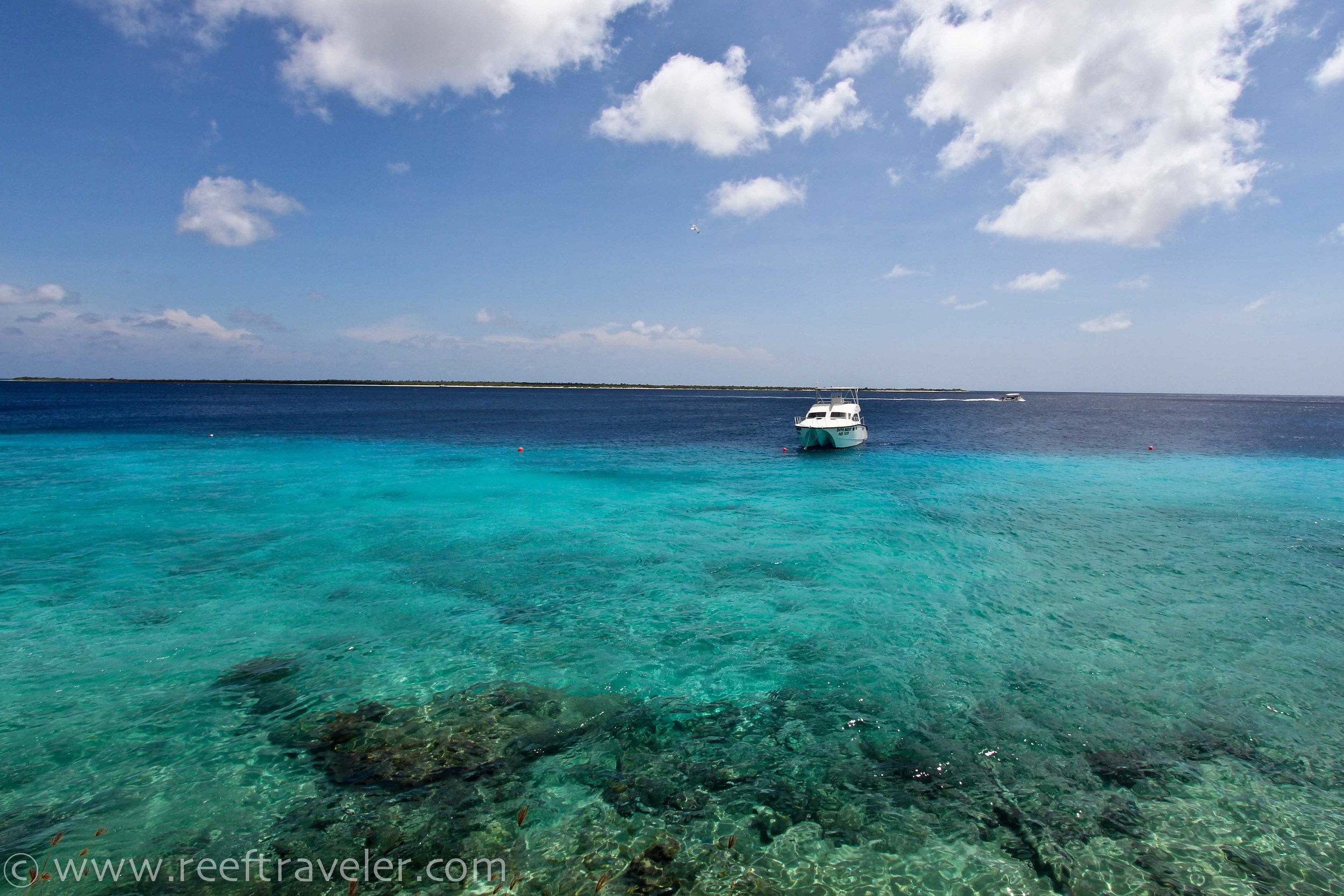 Bonaire Reef from Buddys