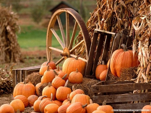 0Pumpkin_Pumpkins_0Autumn_Harvest.jpg