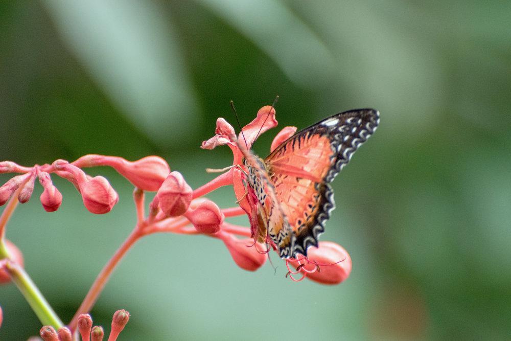 2018 Butterfly Conservatory_0053.jpg