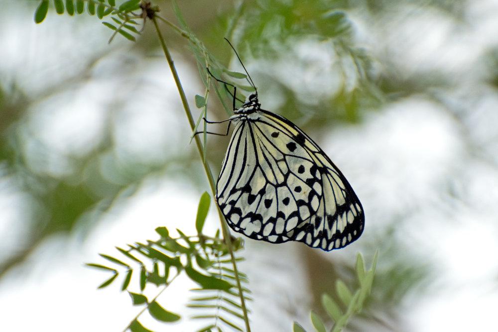 2018 Butterfly Conservatory_0117.jpg