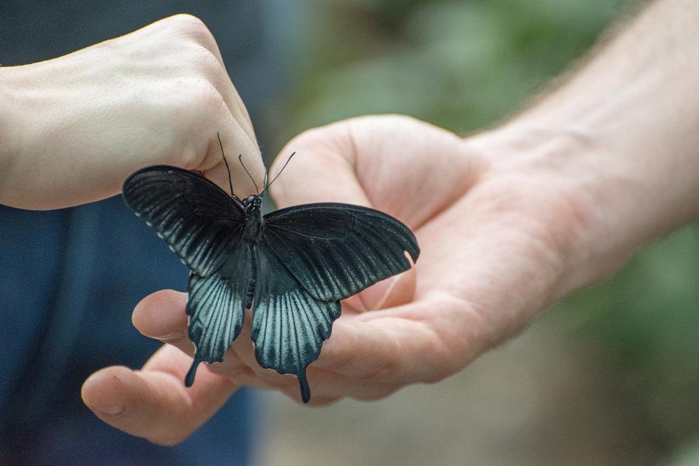2018 Butterfly Conservatory_0121.jpg