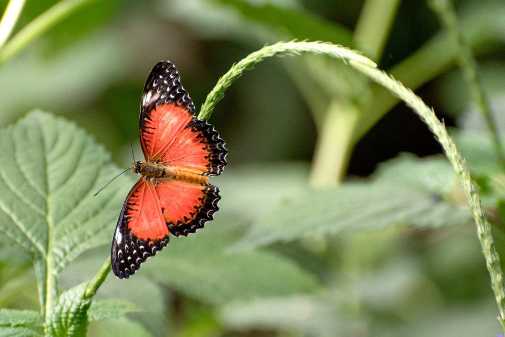 2018 Butterfly Conservatory_0145.jpg