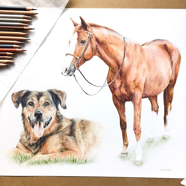 "The completed portrait of Roxie and Bailey (14x17"")! 🐶🐴 I absolutely loved working on this challenging piece. Let me know what you think!"