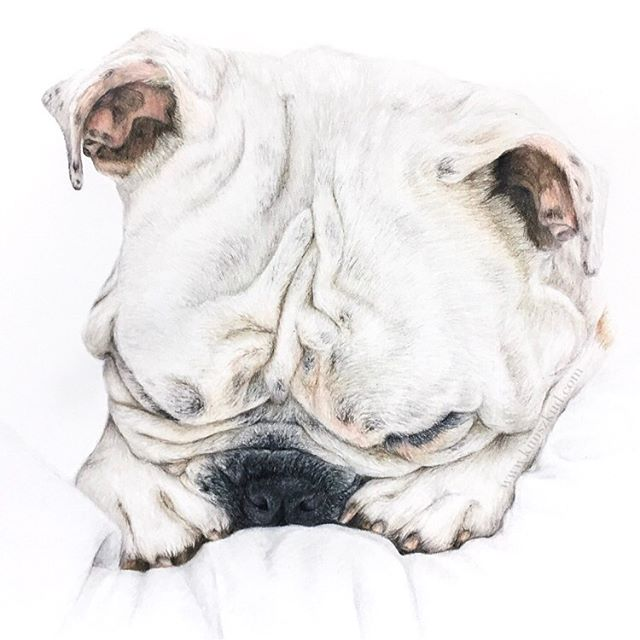 #tbt to this snuggly fella! 🐶 If you're looking to have your pet drawn this year, I have availability starting in mid-late April. DM or email me to enquire 💌