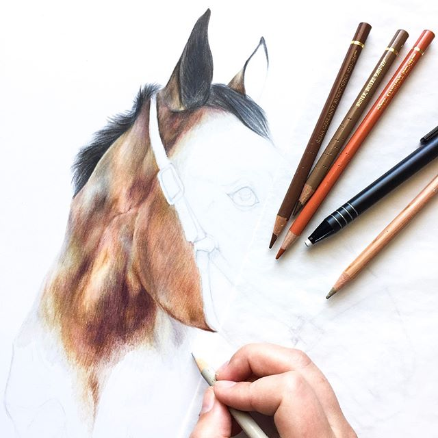 Creating a dynamic brown coat takes more than just a combination of browns. On this portrait, I've been layering in reds, oranges, purples, blues, and pinks! 🌈✍🏻