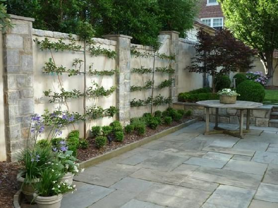 Espalier fruit trees on wall