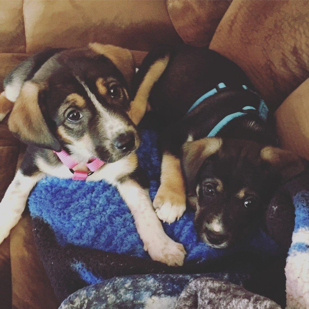 Meet LeeLee and Tony