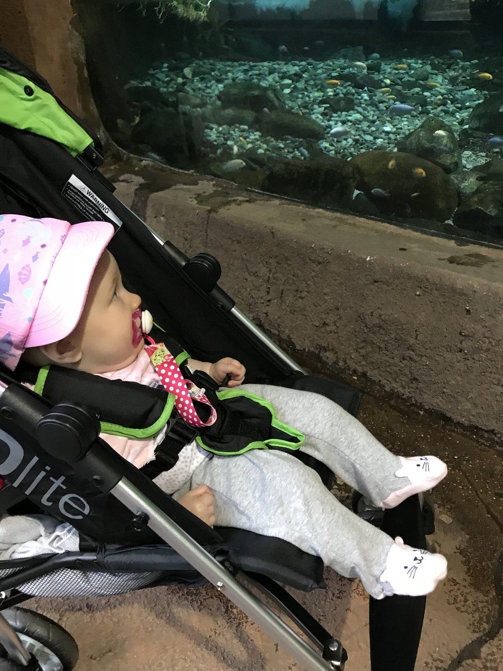 WIWW: Zoo Day