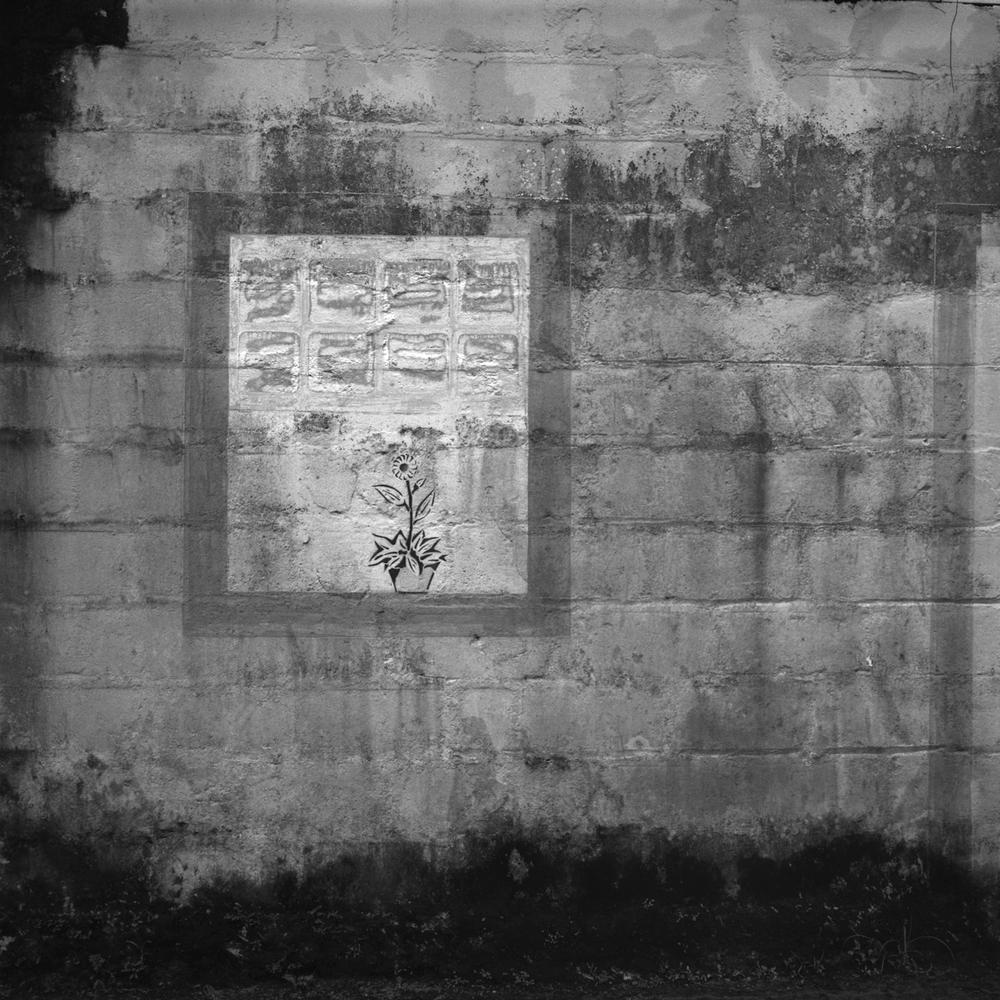 wall flower . ubatuba . 2009