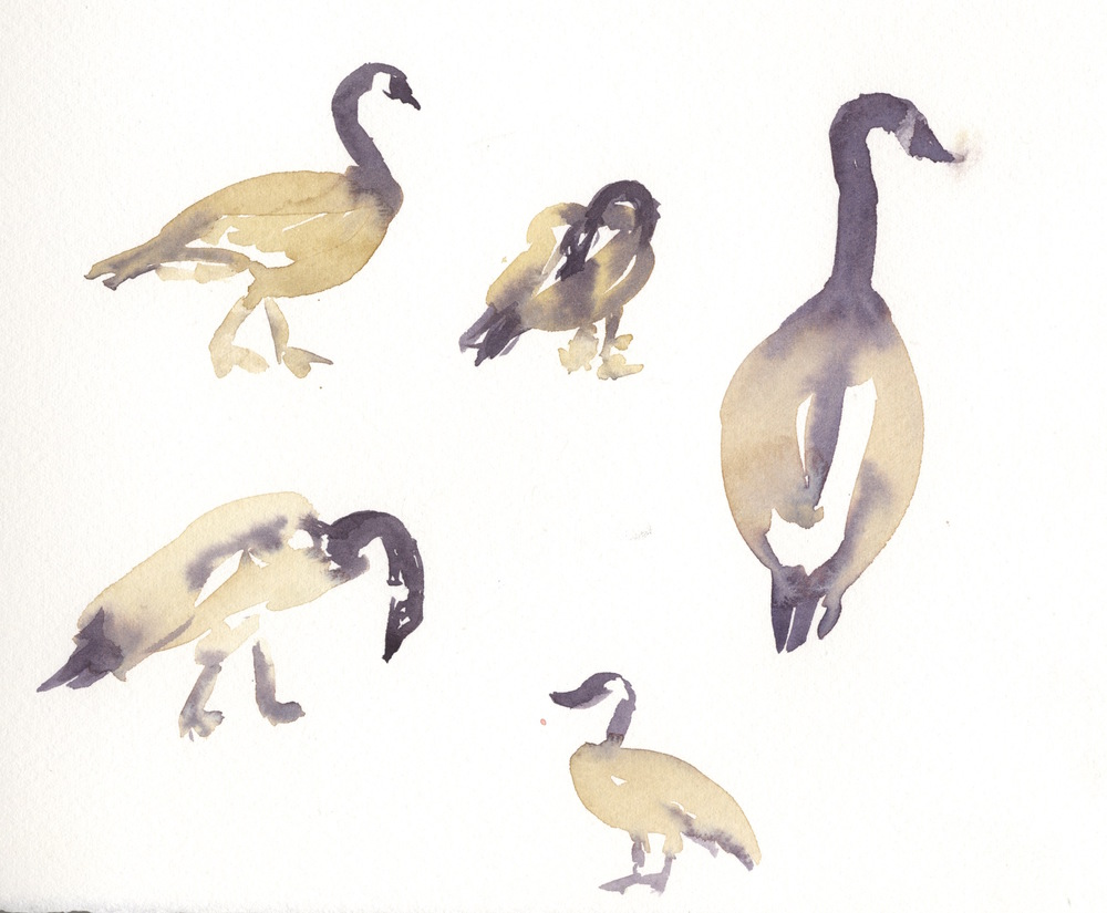 The geese don't stay still, so these are quick gesture paintings drawn with the brush and watercolor.