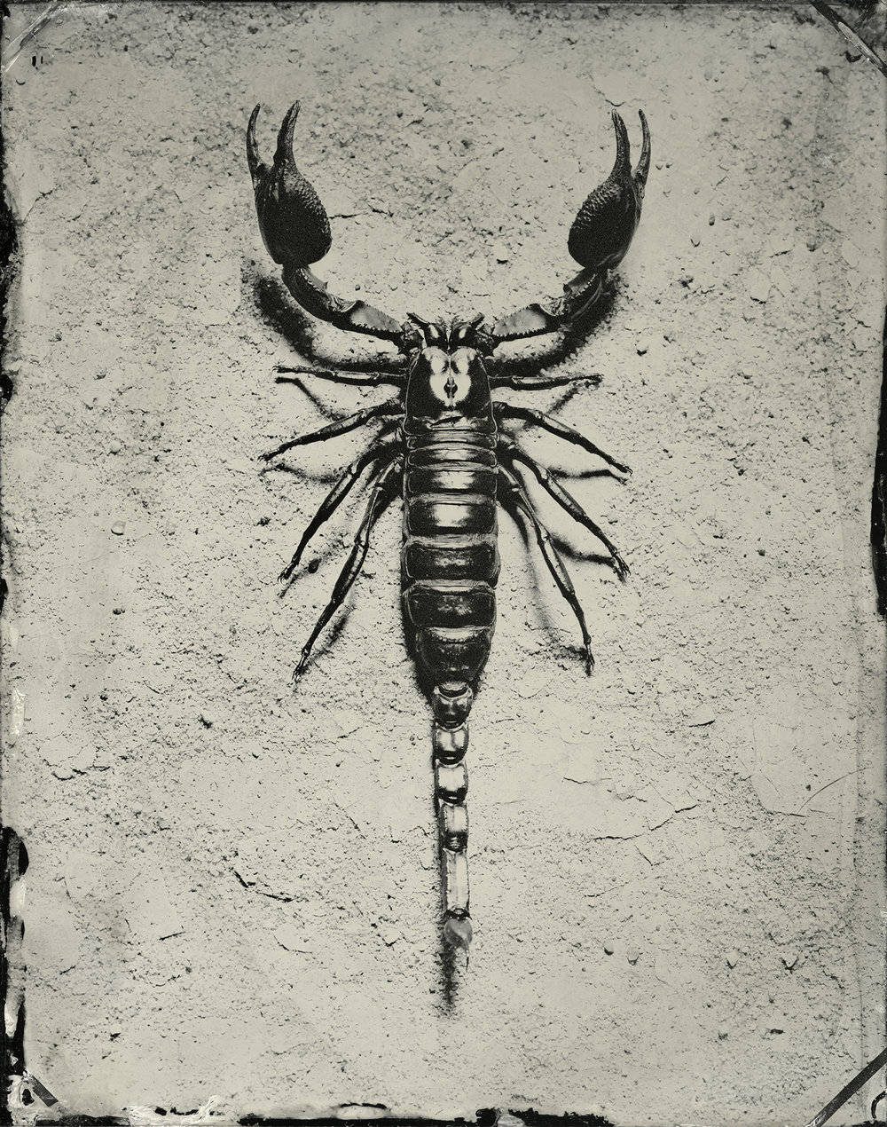 24x30_scorpion_sec.jpg