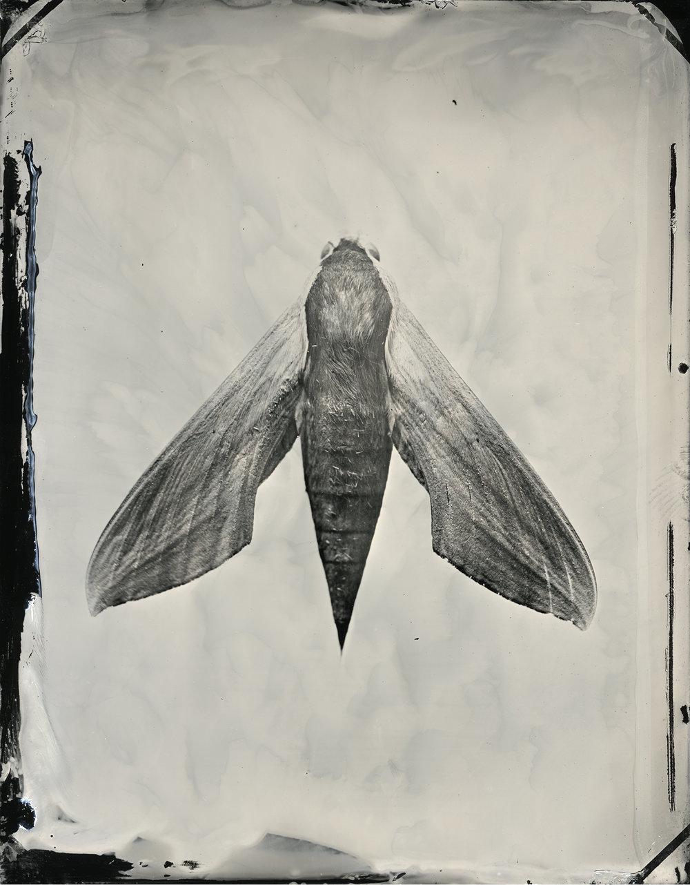 moth_prime_final_24x30_print_sec.jpg