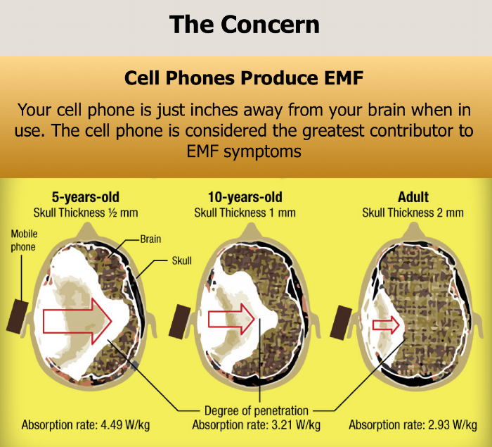The above images show the penetration of the EMF into the brain.