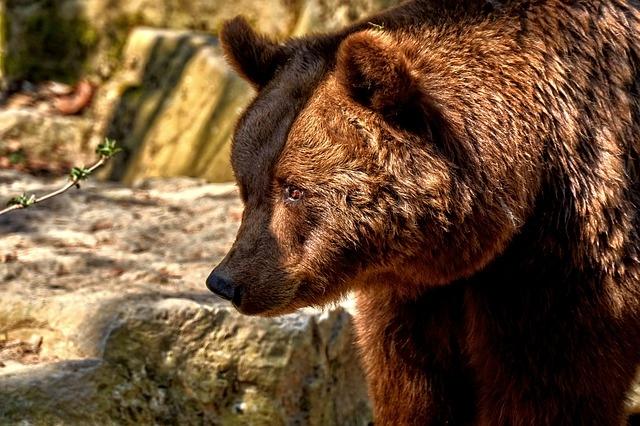 bear-3308569_640.jpg