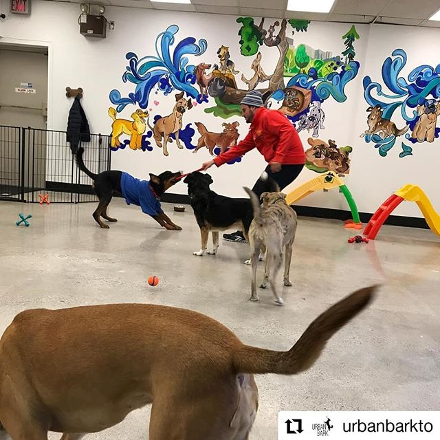 Besides me wanting to jump right into this picture and play with all the pups, every time I see this mural @urbanbarkto I smile from ear to ear  So glad to see everyone enjoying the play room as much as I enjoyed painting it❤❤🐕🐶🎨 . . . .  #urbanbark #muralmuralonthewall #muraldesign #muralist #torontoartist #torontomural #doggydaycare #mural #streetart #doggyart #artist #play #colourful #artoftheday