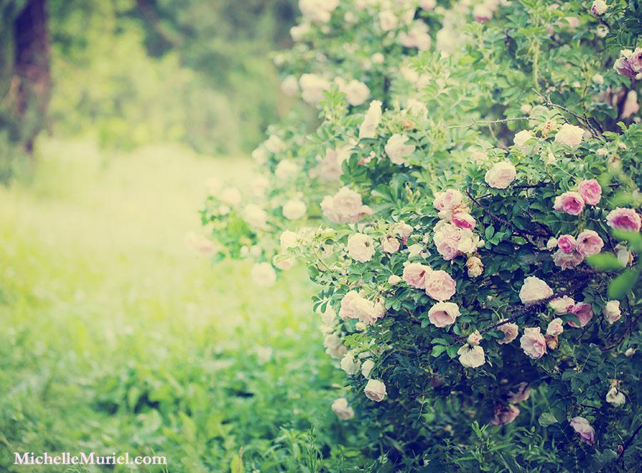 Essie's Roses an award-winning, bestselling novel by Michelle Muriel www.michellemuriel.com