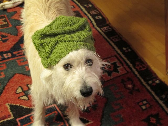 I can't resist throwing in a photo of Rocky, back in Maine. He was modeling a double-helix hat knitted for me by the Notebook's multitalented Shannara Gillman.