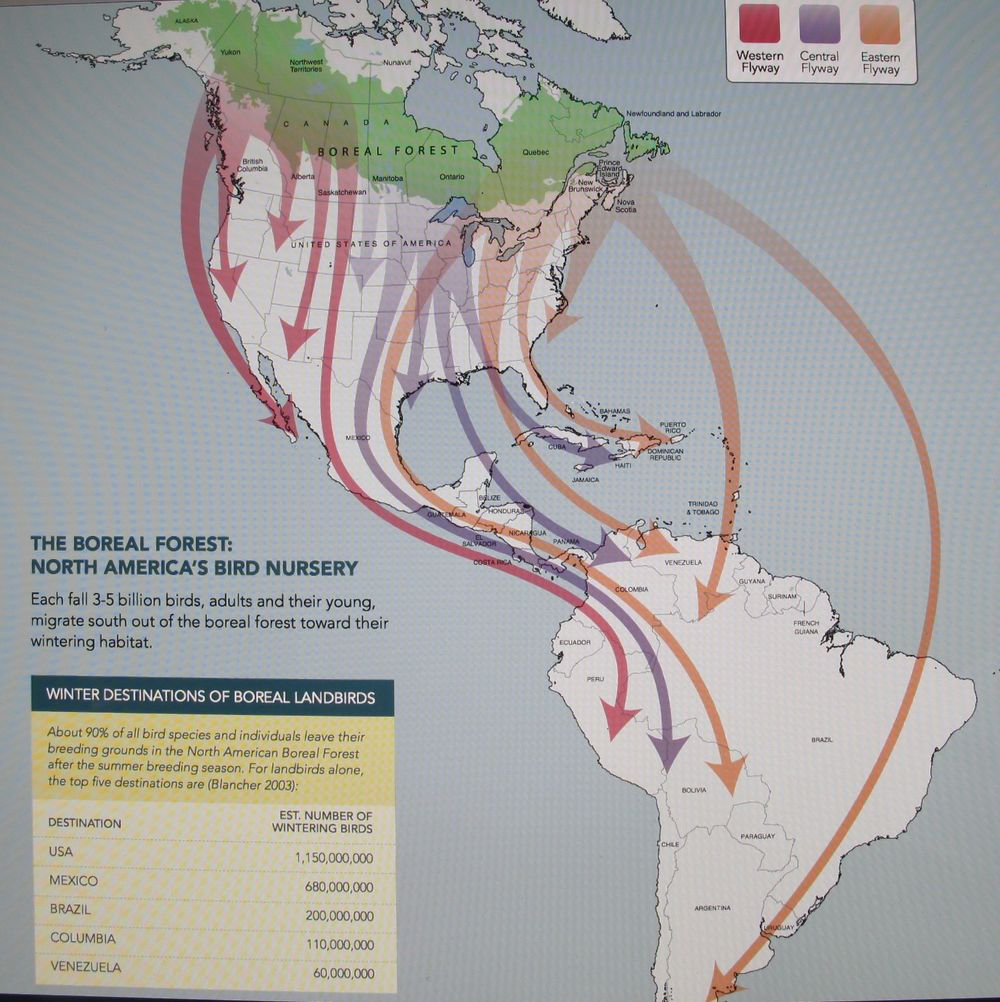This map shows the routes taken by birds leaving the boreal forest in late summer and fall. According to Jeff's report, between 3 billion and 5 billion birds migrate south after young have hatched. About a billion of them winter in the U.S.; others fly as far as Tierra del Fuego, at the southern tip of South America.