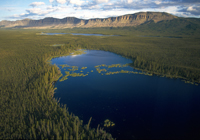 Oscar Lake is surrounded by boreal forest in Canada's Northwest territories. (photo courtesy of Ducks Unlimited Canada)