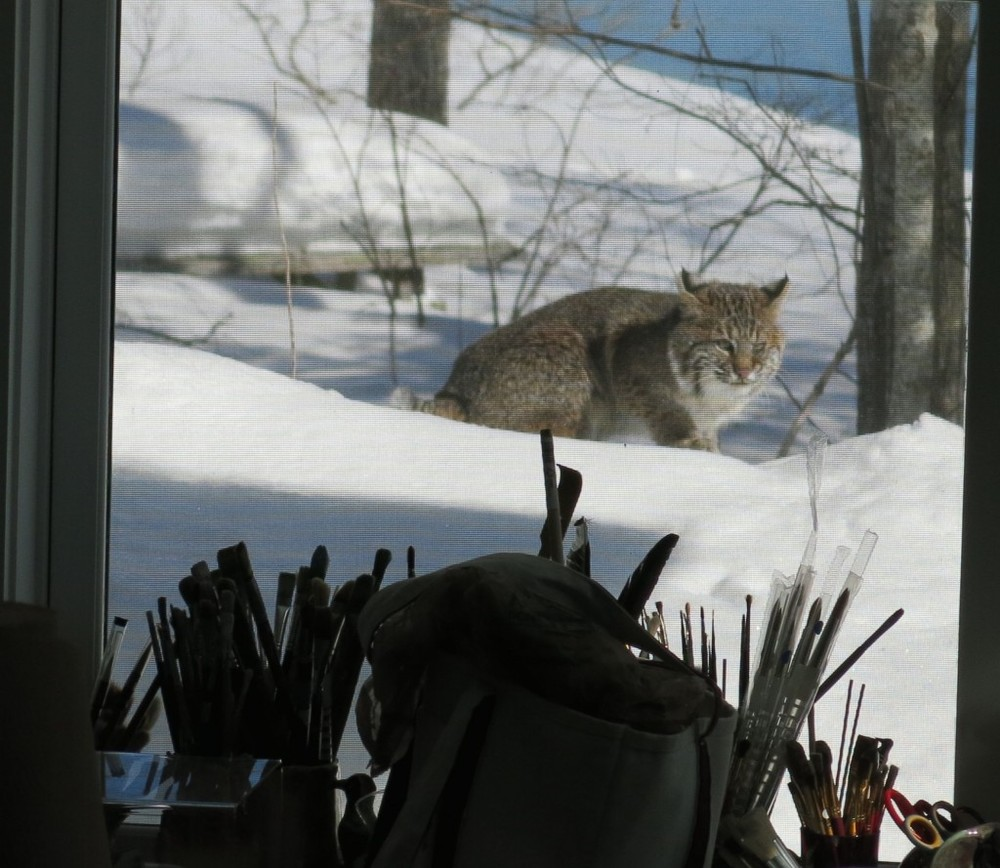 The cat often walked by our art studio. He sometimes hid under the picnic table in the distance when hunting.