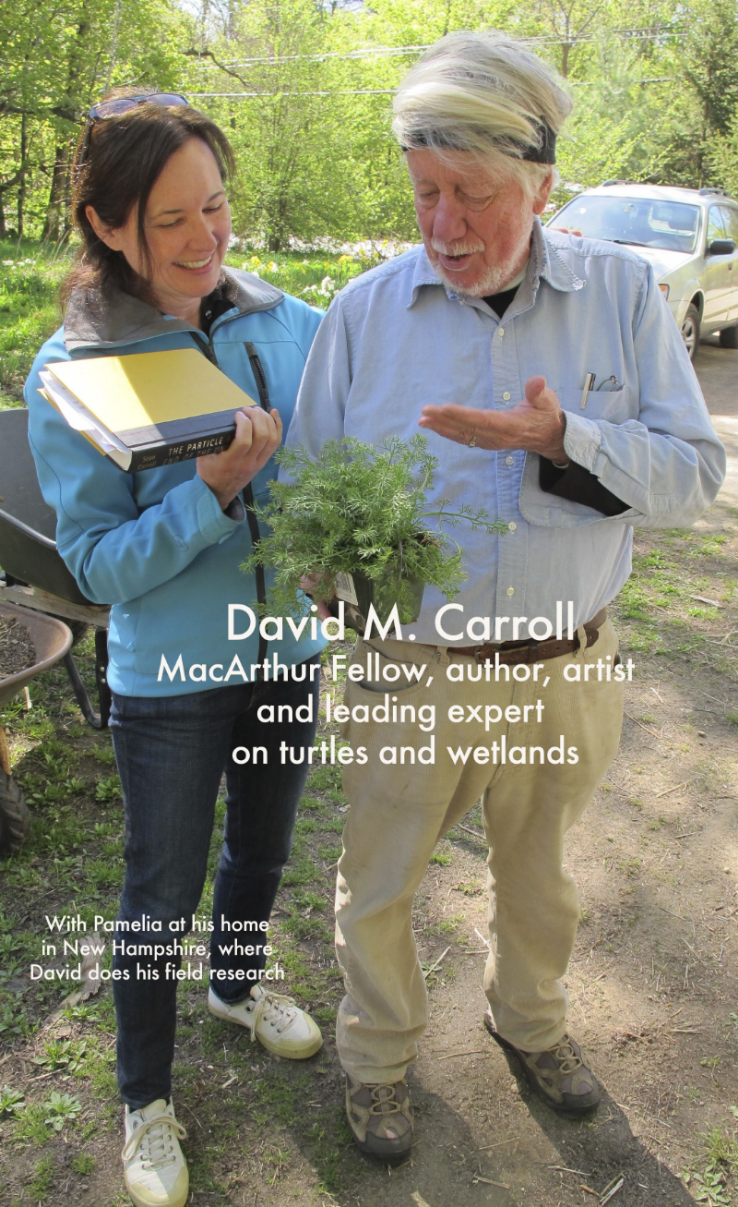 "MacArthur Fellow David M. Carroll is also one of the world's greatest living naturalists and is a sublime writer and artist (a graduate of the School of the Museum of Fine Arts in Boston). He has been a National Book Award finalist in nonfiction and won the 2001 John Burroughs Medal for natural-history writing. David has spent decades studying wetland life, particularly turtles. His books include  Swampwalker's Journal: A Wetlands Year  (which is often used as a text in college environmental courses),  The Year of the Turtle: A Natural History  and  Self-Portrait with Turtles: A Memoir . He and his wife, Laurette, also a gifted artist, have welcomed us several times to their New Hampshire home, and we highlight their work, sell David's books and paintings, and display some of David's turtle-shell specimens and share his wetlands knowledge in our Seal Harbor and Northeast Harbor spaces. David is a man of many passions, from studying and protecting nature to painting in his studio to learning to speak Russian just because he wants to know how to speak Russian. We agree with author Annie Dillard's assessment: David M. Carroll is ""a national treasure."""