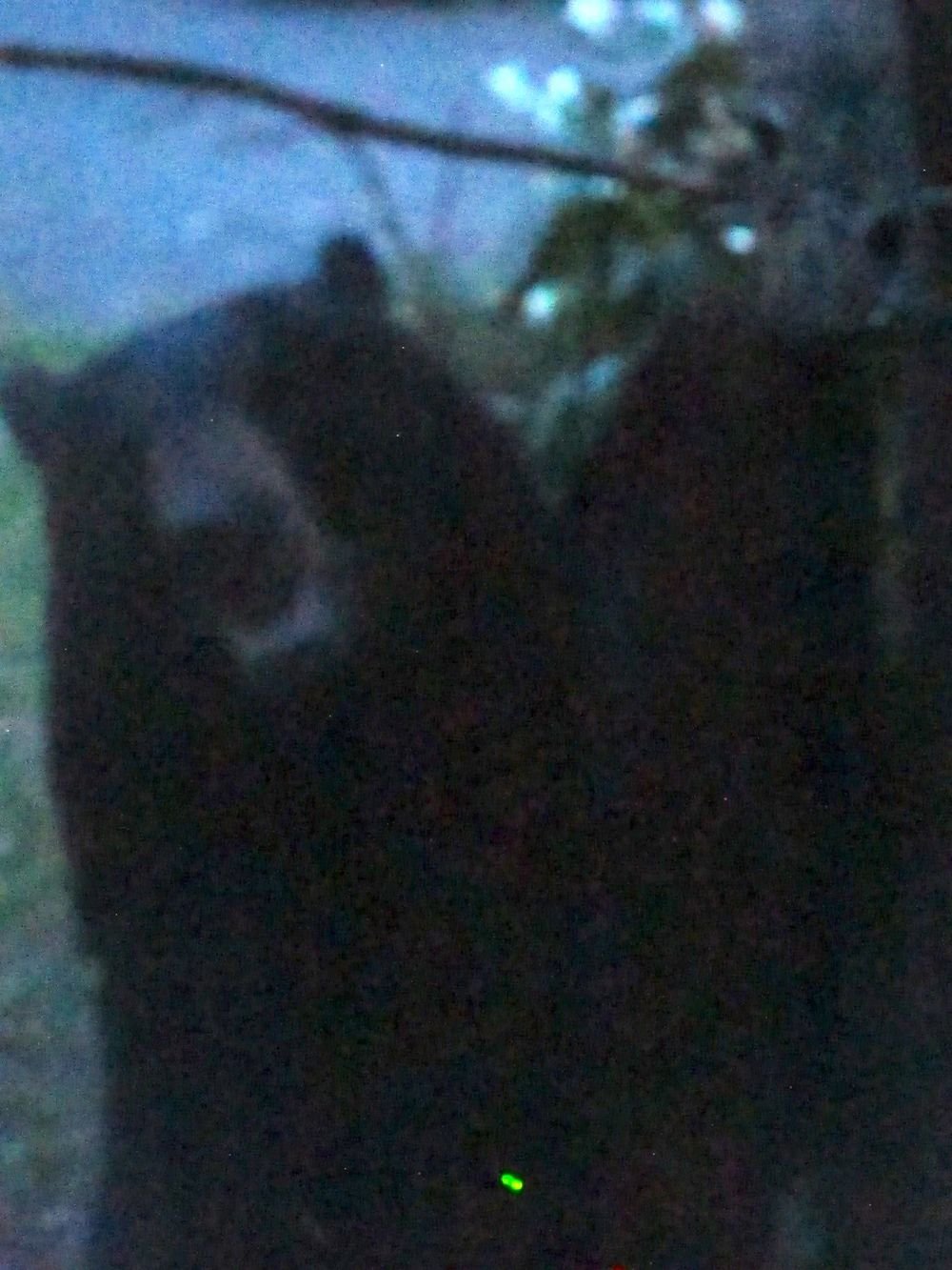 A black bear visited our house the other evening and chowed down on seed from all of our feeders. He or she also bent a steel pole on which one of our hummingbird feeders hangs.