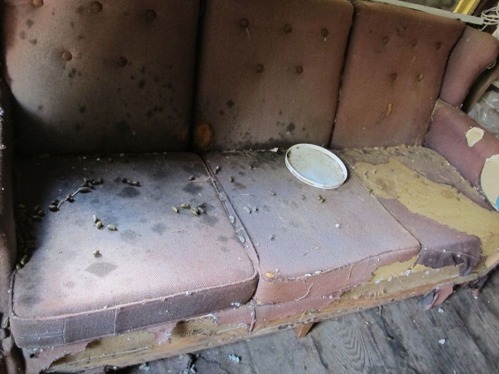 This is the porcupine couch in all its glory. No porcupines were in the empty cabin when we looked around, but the evidence of their presence was everywhere.