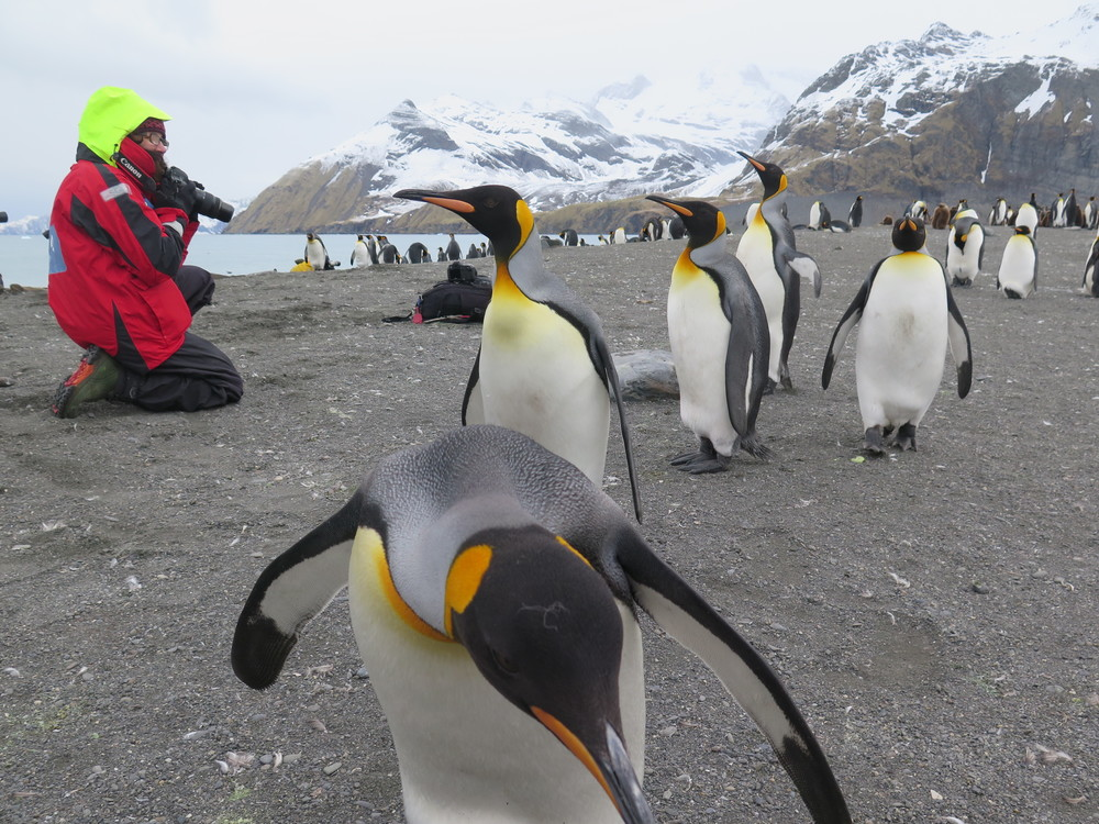 Pamelia and others learned that the best way to get Antarctic wildlife to approach was to sit still and wait. That time of quiet watching brought other rewards, including insights into the animals' behavior and a deep sense of connection to the animals and the place.