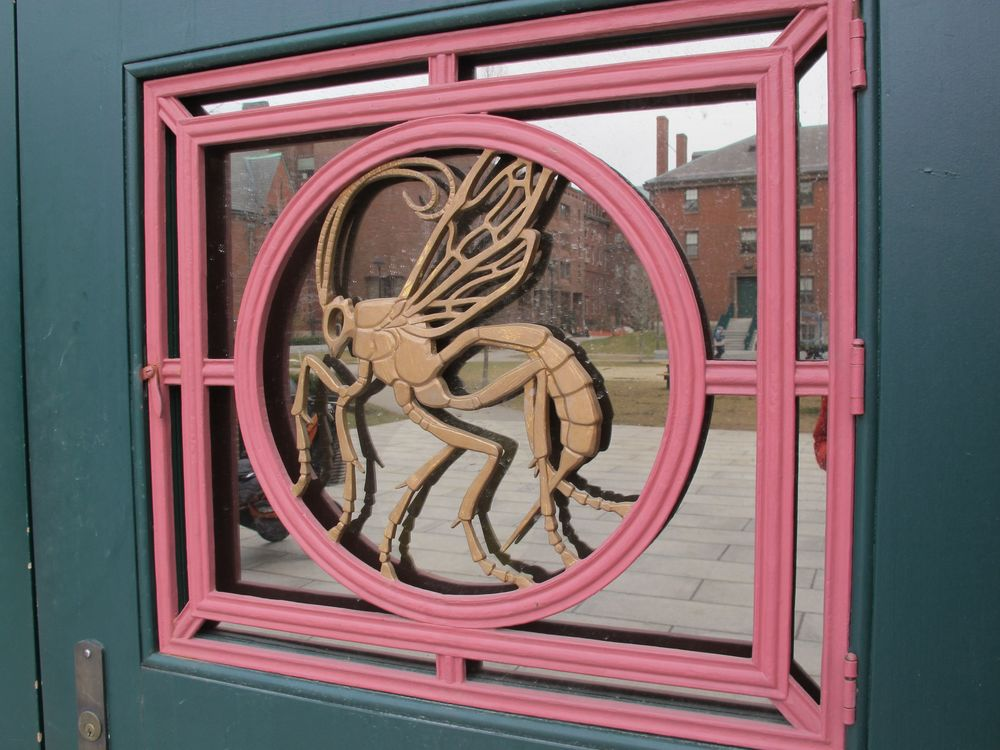 Katharine Lane Weems also designed every one of the bronze door panels on the Bio Lab building. Each shows a different insect.