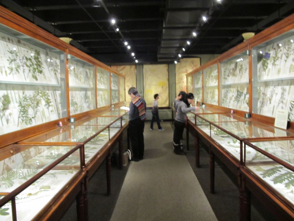 The Glass Flowers Room might be the biggest highlight of Harvard's Natural History Museum.