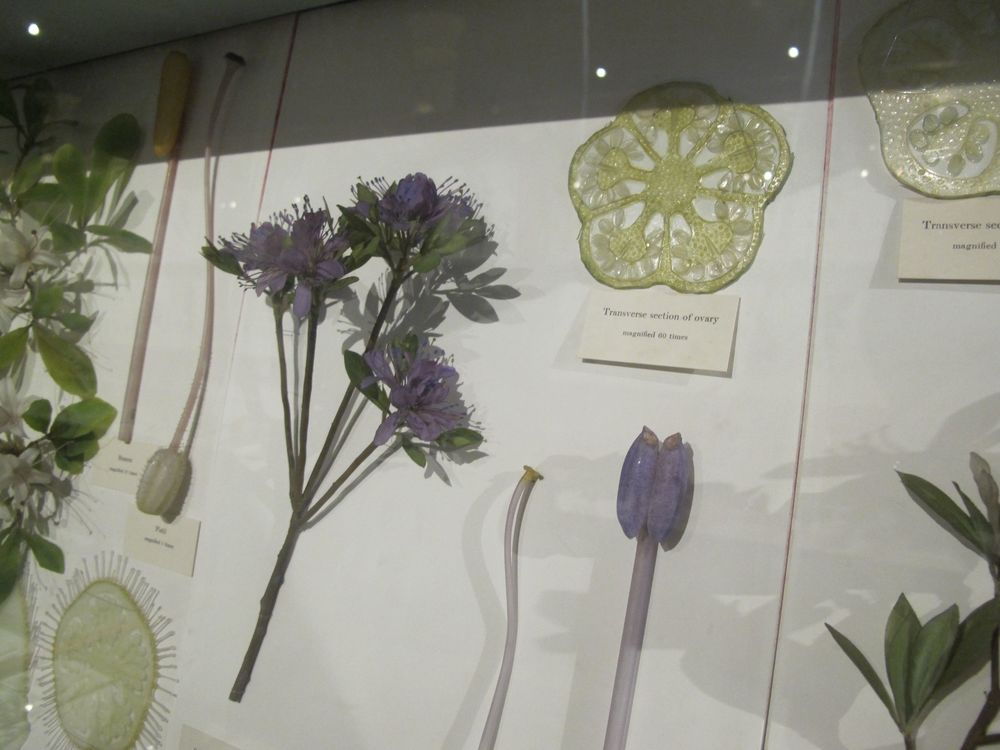 According to a display, the Blaschkas used glass-working techniques they had adapted from jewelry making. They pulled, crinkled and occasionally blew glass tubing and plate glass after softening it over a flame. They fused wire to the base of glass leaves, petals and other parts and assembled them, and used glass tubing for stems. They initially painted the work, but because Rudolf wasn't satisfied with the colors of commercial pigments, they later made their own colored glasses to work with.