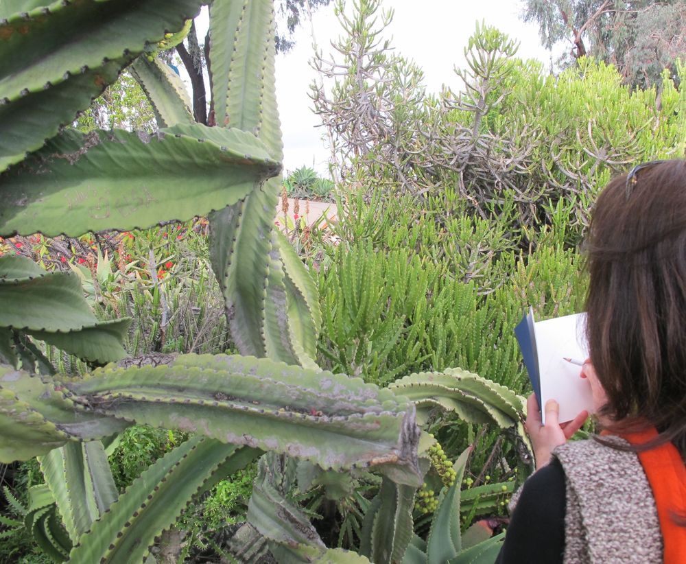 Why it's good to keep a sketchbook with you when you're out walking: Pamelia did a fast drawing of a hummingbird we saw in the cactus garden at San Diego's Balboa Park. The bird seemed to be attracted to our orange sweaters.